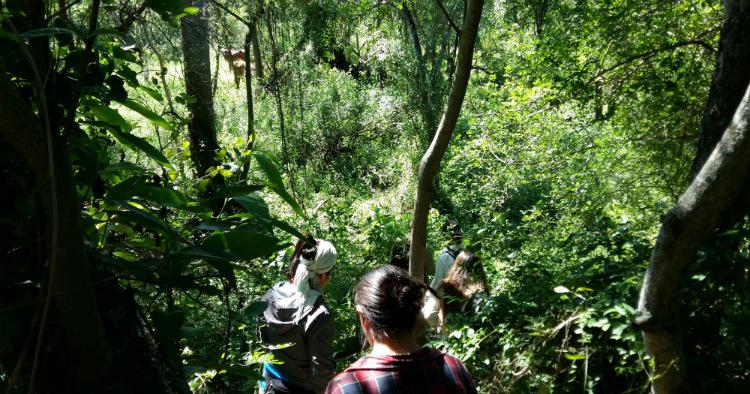 Verde puro en El Impenetrable, Chaco
